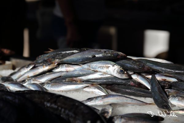 Fish at the market in Funchal, Madeira, Portugal