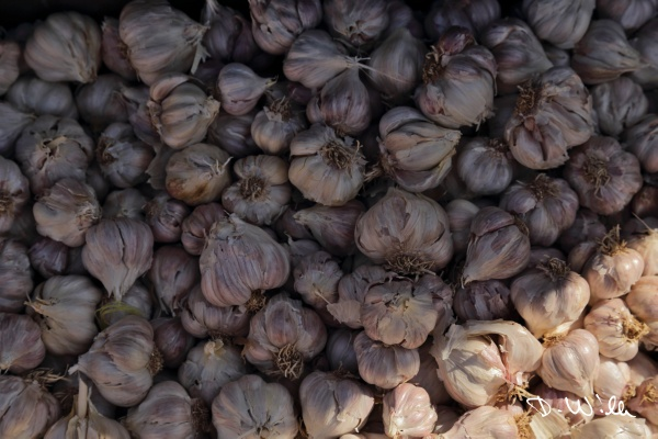 Garlic at the souq in Nizwa, Oman