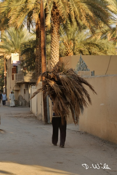 Man carrying palm leafs, Birkat al Mouz, Oman