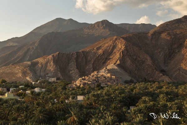 Old loam town of Birkat al Mouz with palm groves in the foreground, Birkat al Mouz, Oman