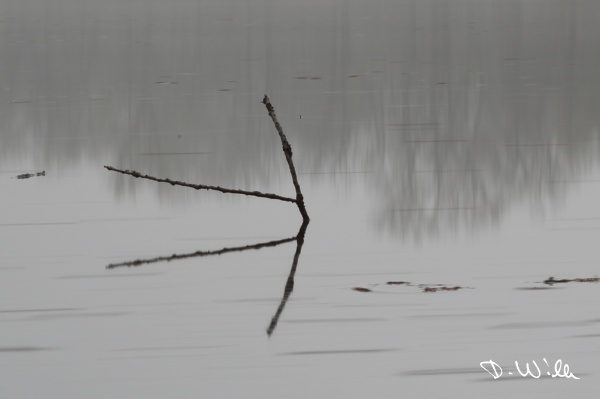 Branch sticking out of Kreuzteich (long exposure), Riddagshausen, Braunschweig, Germany