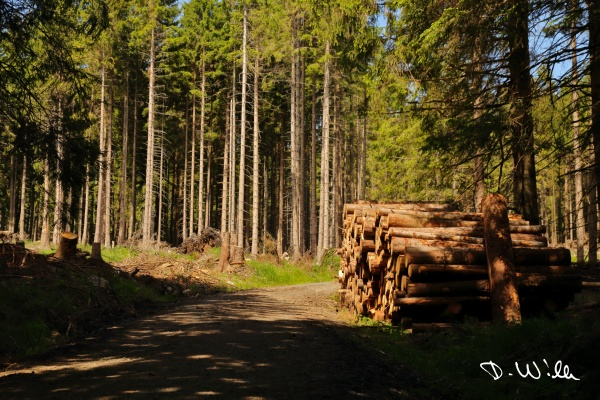 Logs piled up next to a trail, Harz, Germany