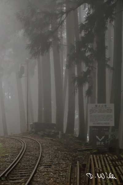 Rails of the Alishan Forest Railway, Alishan, Taiwan