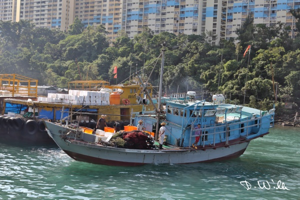 Trawler at Aberdeen harbor, Aberdeen, Hong Kong