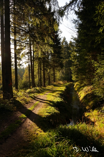 Forest path, Harz, Germany