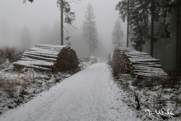 Snow covered forest path, Harz, Germany