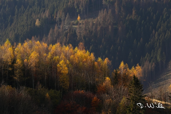 Trees highlighted by the autumn sun, Harz, Germany