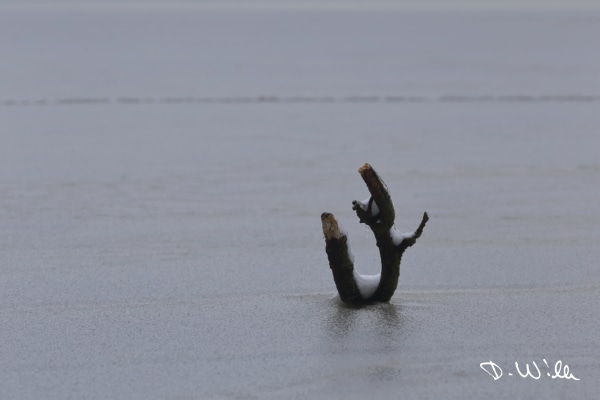 Branch sticking out of the frozen surface of a pond, Riddagshausen, Braunschweig, Germany