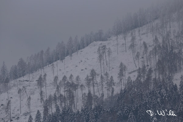 Slope and trees covered in snow, Harz, Germany