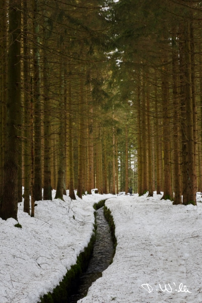 Snow covered hiking trail under trees, Harz, Germany