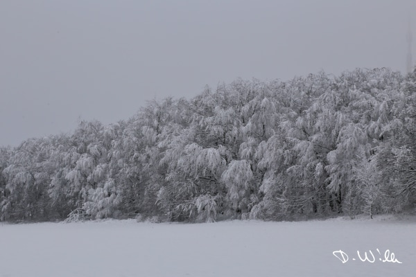 Trees covered in snow, Harz, Germany